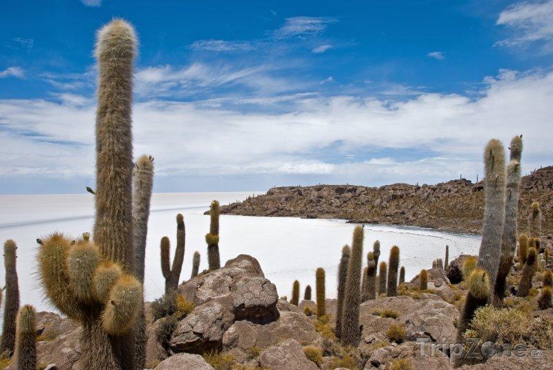 Fotka, Foto Kaktusy na břehu jezera Salar de Uyuni (Bolívie)