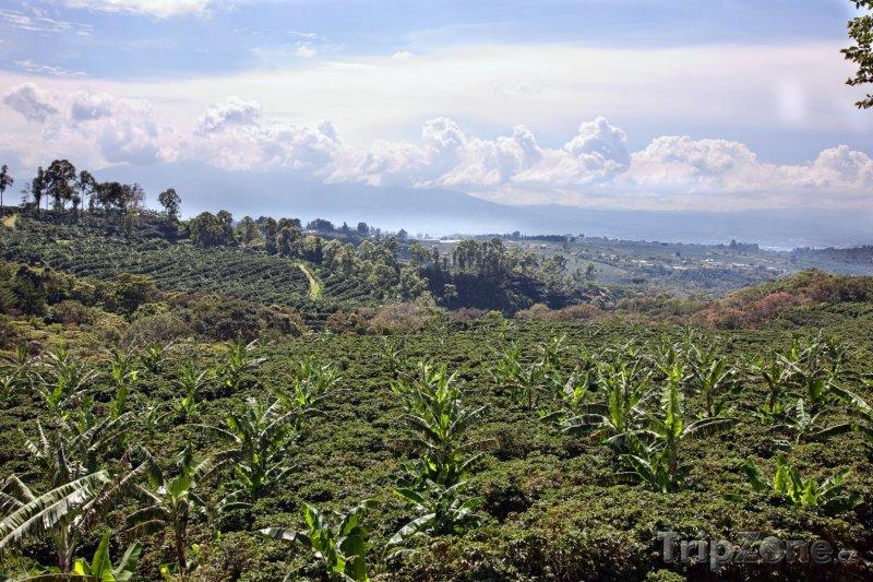 Fotka, Foto Kávová plantáž (Kostarika)
