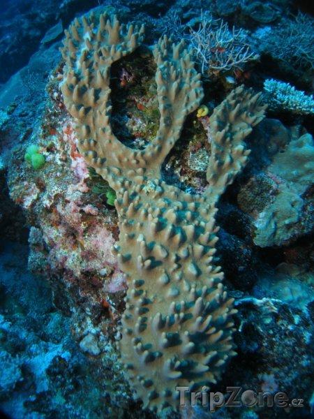 Fotka, Foto Korál v detailu (Fidži)