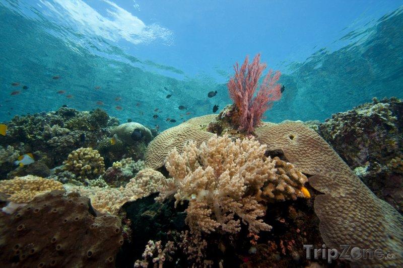 Fotka, Foto Korálový útes u ostrova Bunaken (Indonésie)