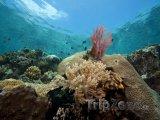 Korálový útes u ostrova Bunaken