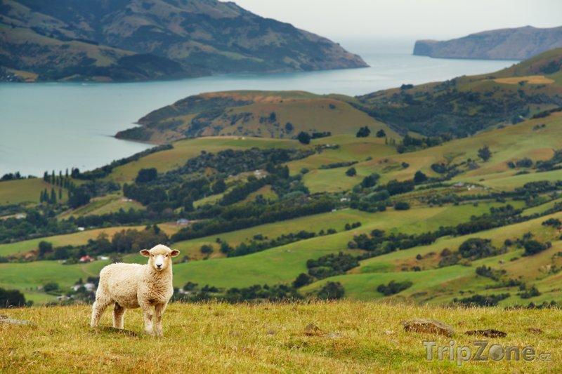 Fotka, Foto Krajina na poloostrově Banks (Nový Zéland)