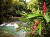 Kvetoucí zázvor u řeky Y.S.