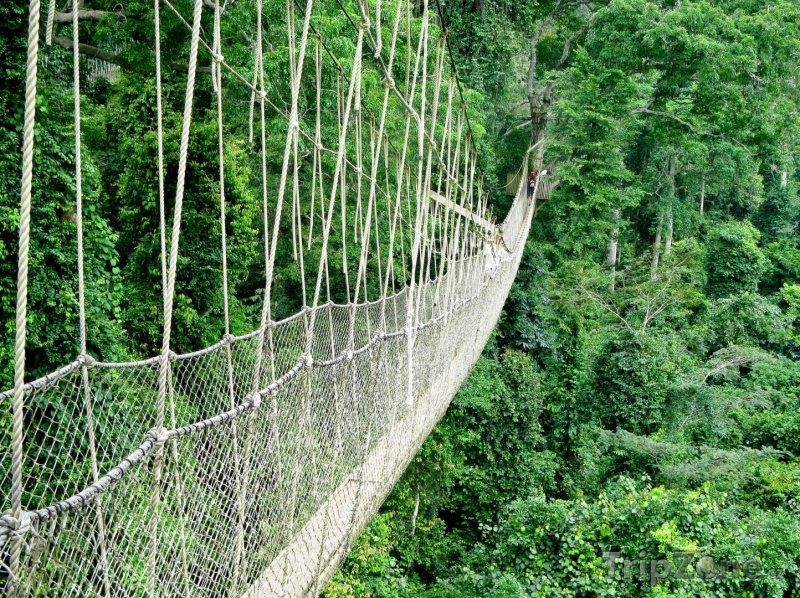 Fotka, Foto Lanový most v pralese (Ghana)