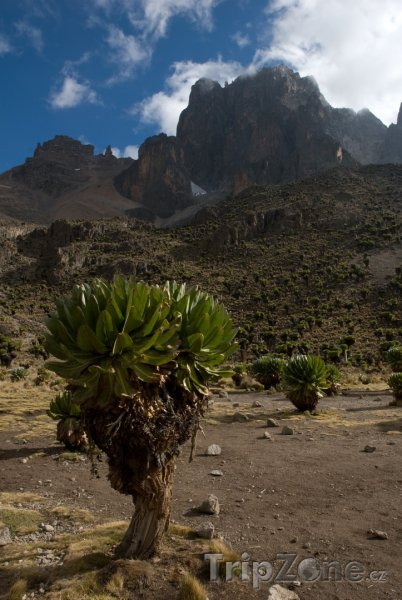 Fotka, Foto Masiv Mount Kenya (Keňa)