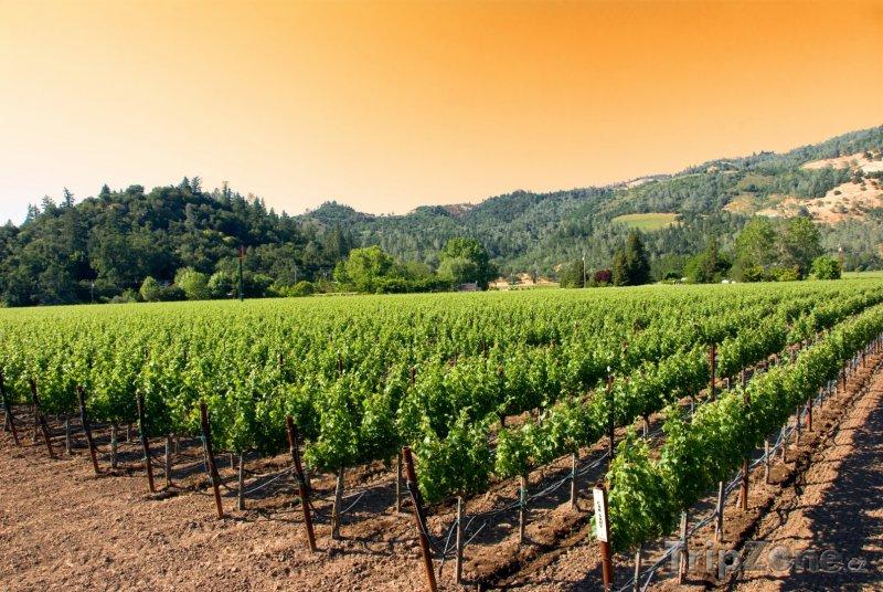 Fotka, Foto Napa, vinice (USA)