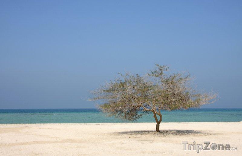 Fotka, Foto Osamocený strom na pláži (Bahrajn)