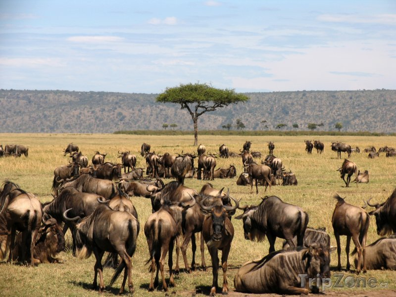 Fotka, Foto Pakoňové v národním parku Masai Mara (Keňa)