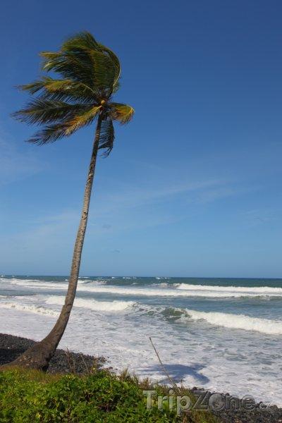 Fotka, Foto Palma na pláži (Dominika)