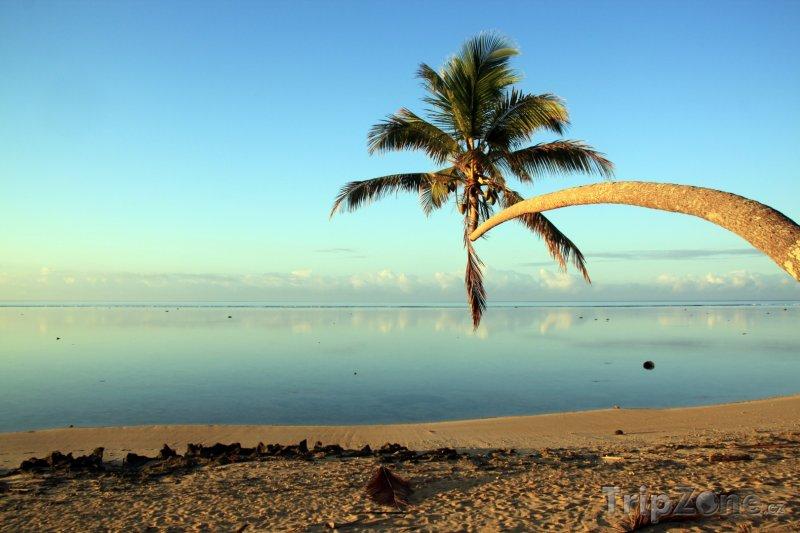 Fotka, Foto Palma na pláži (Fidži)