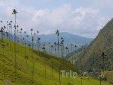 Palmy v Cocora valley