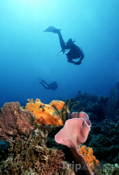 Fotka, Foto Potápěč u korálového útesu (Dominika)