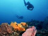 Potápěč u korálového útesu