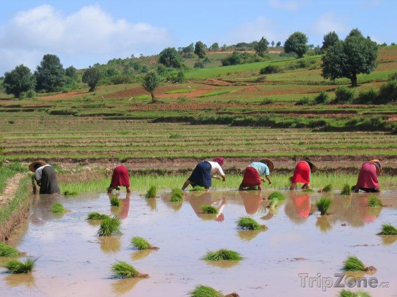 Fotka, Foto Práce na rýžovém poli u města Kalaw (Barma)
