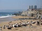 Rackové na pláži ve Viña del Mar