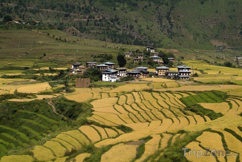 Fotka, Foto Rýžová pole v údolí Punakha (Bhútán)