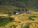 Rýžová pole v údolí Punakha