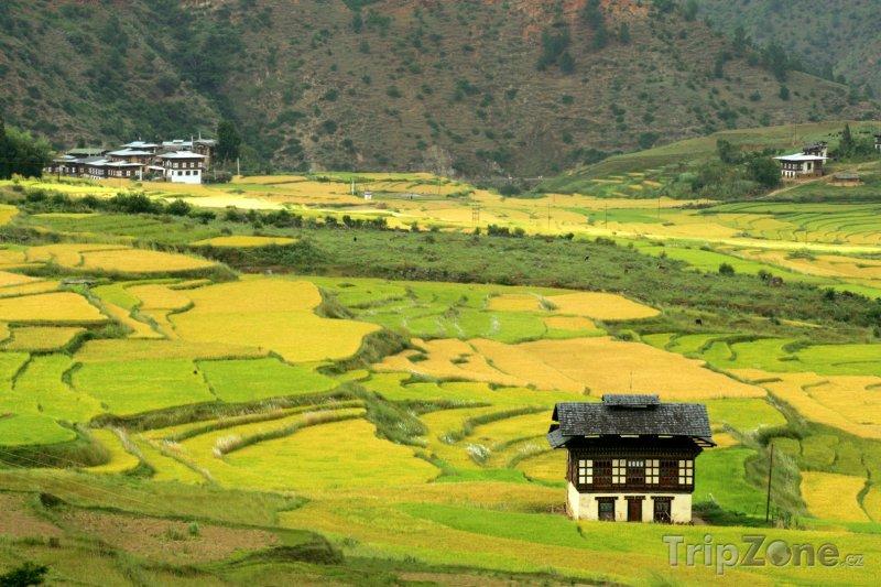 Fotka, Foto Rýžová pole (Bhútán)