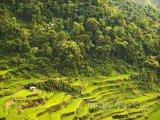 Rýžové terasy