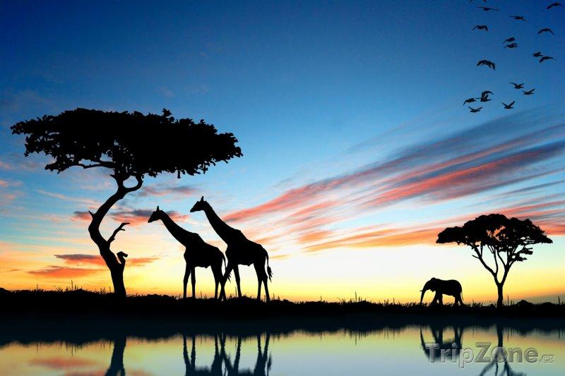 Fotka, Foto Safari v západu slunce (Keňa)