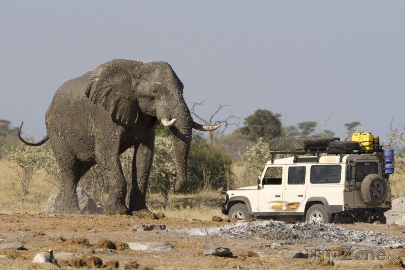 Fotka, Foto Slon africký u Jeepu (Botswana)