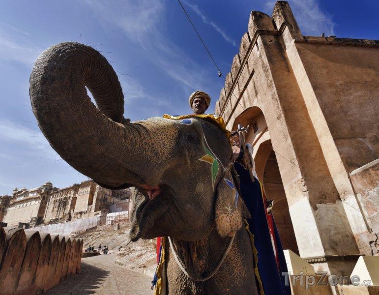 Fotka, Foto Slon u pevnosti Amber v Džajpuru (Indie)