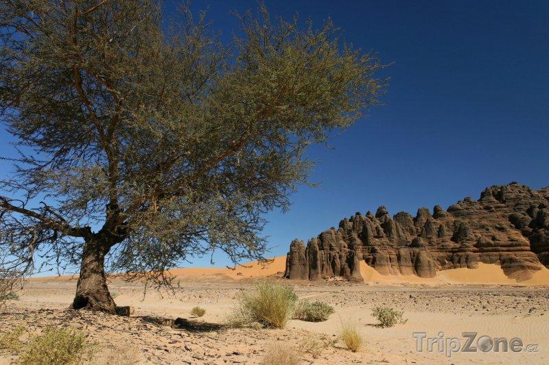Fotka, Foto Strom a pohoří Ahaggar na Sahaře (Alžírsko)