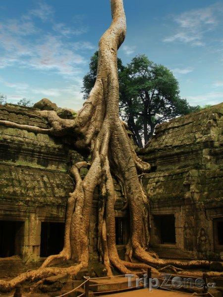 Fotka, Foto Strom rostoucí na chrámu Ta Prohm (Kambodža)