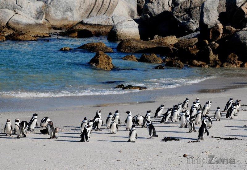 Fotka, Foto Tučňáci na pláži (Jihoafrická republika)