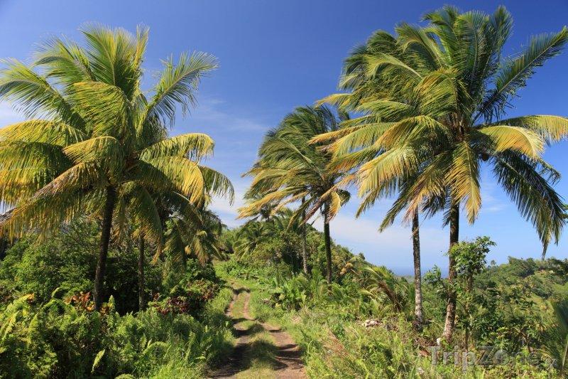 Fotka, Foto Turistická stezka (Dominika)