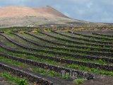 Vinice na ostrově Lanzarote