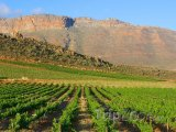 Vinice v pohoří Cederberg