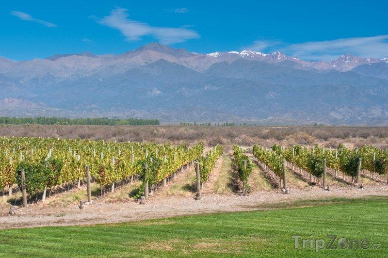 Fotka, Foto Vinice v provincii Mendoza (Argentina)