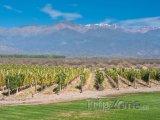 Vinice v provincii Mendoza