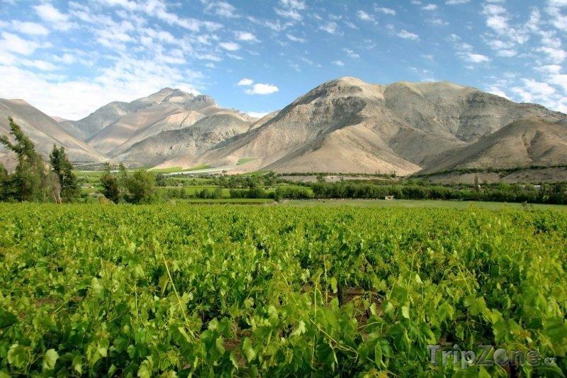 Fotka, Foto Vinice v údolí Valle del Elqui (Chile)