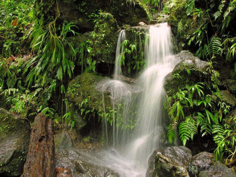 Fotka, Foto Vodopád v pralese (Dominika)