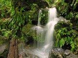Vodopád v pralese