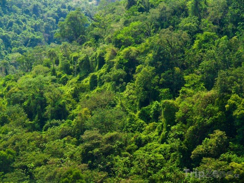 Fotka, Foto Deštný prales (Paraguay)
