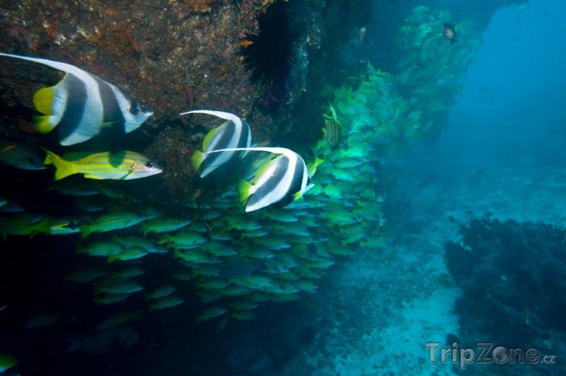 Fotka, Foto Korálové útesy u města Tofo (Mosambik)