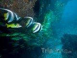 Korálové útesy u města Tofo