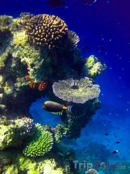 Fotka, Foto Korálový útes (Maledivy)