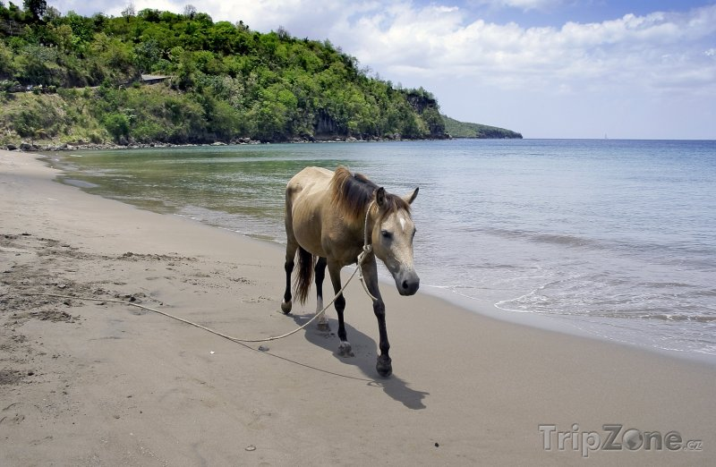 Fotka, Foto Kůň na pláži (Svatá Lucie)