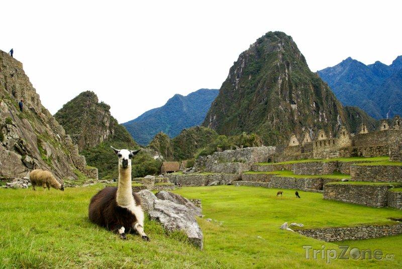 Fotka, Foto Lamy na Machu Picchu (Peru)