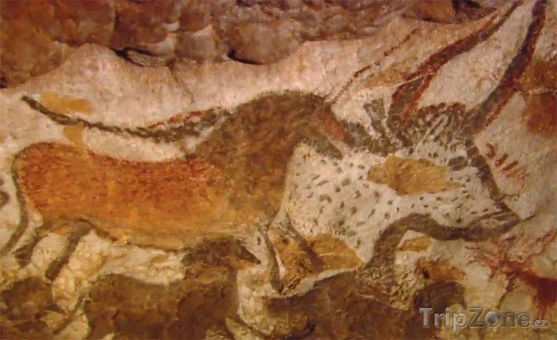 Fotka, Foto Malby v jeskyni Lascaux (Francie)