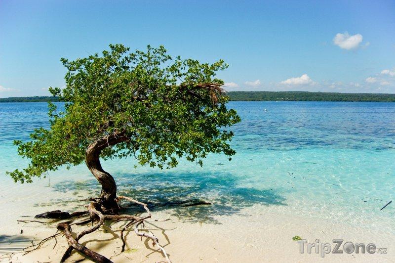 Fotka, Foto Mangrovy na pláži Cayo Sombrero (Venezuela)