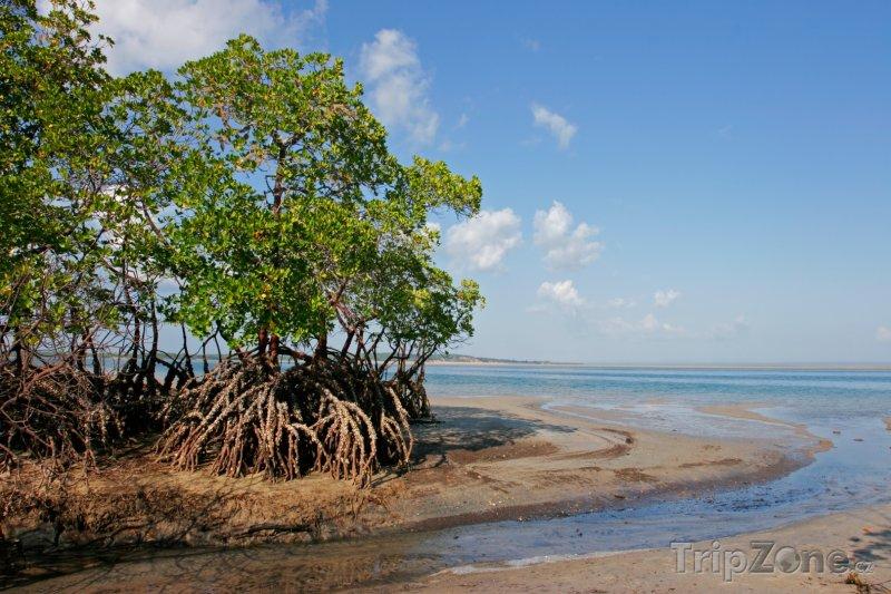 Fotka, Foto Mangrovy na pobřeží města Vilankulo (Mosambik)