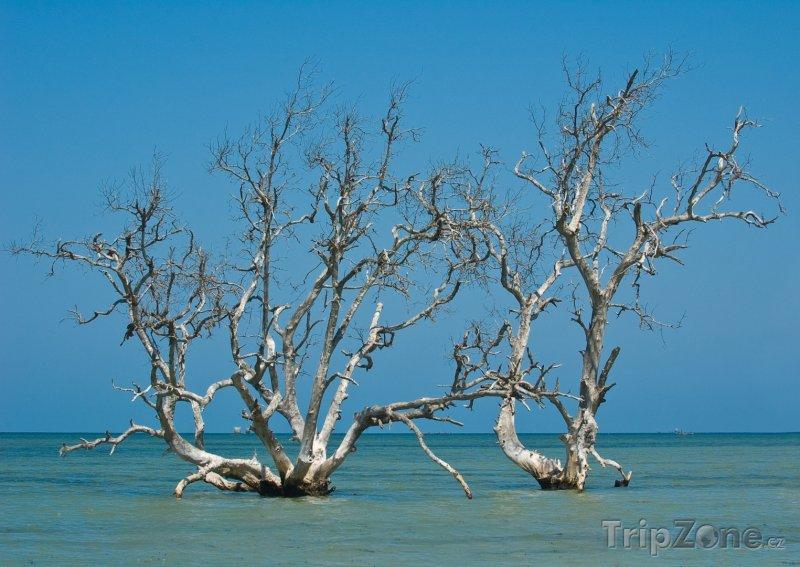 Fotka, Foto Mangrovy v moři u vesničky Tsifota (Madagaskar)