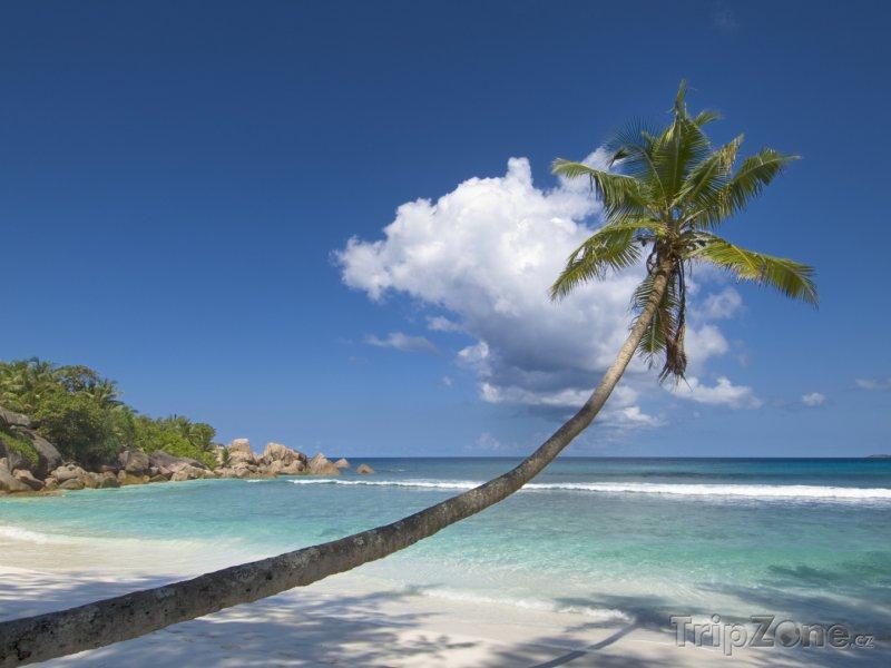 Fotka, Foto Palma na pobřeží ostrova La Digue (Seychely)