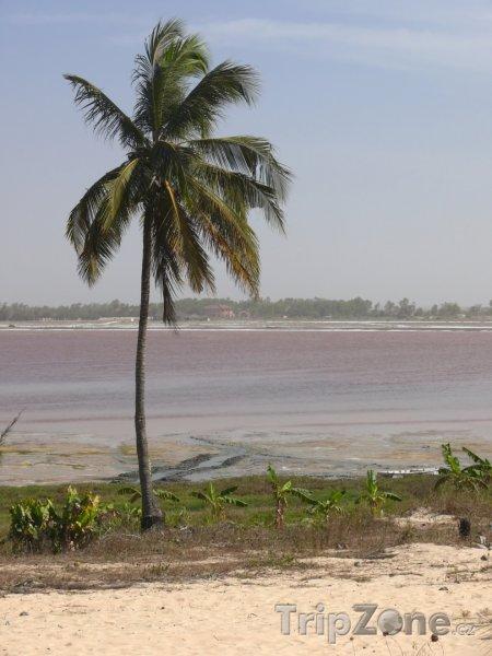 Fotka, Foto Palma u Růžového jezera (Senegal)