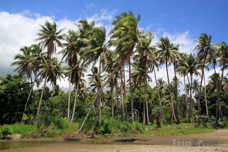 Fotka, Foto Palmy na pláži (Vanuatu)